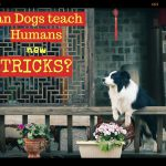 2018 : Can a dog teach a human new tricks?