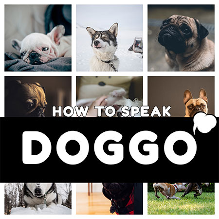 5 Life-Changing Ways To Understand Your Dog